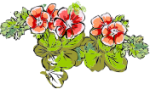 geranium-150x89